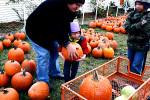 Gene the Pumpkin Man Kalamazoo