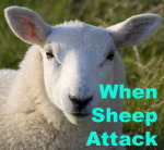 When Sheep Attack